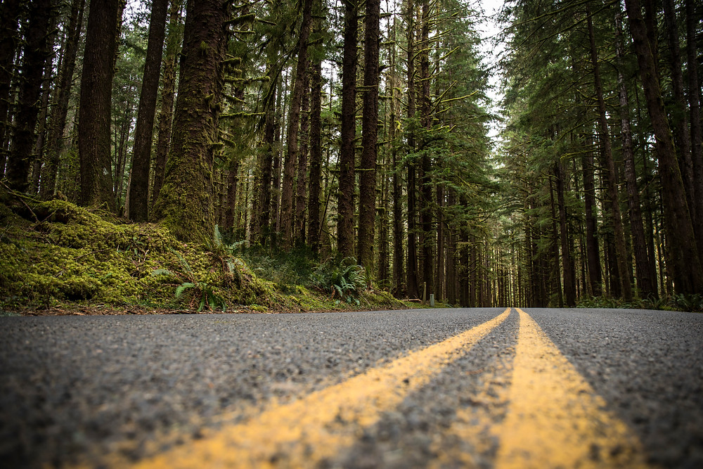 Hoh Rain Forest Road at Olympic National Park in Washington during our PNW road trip.