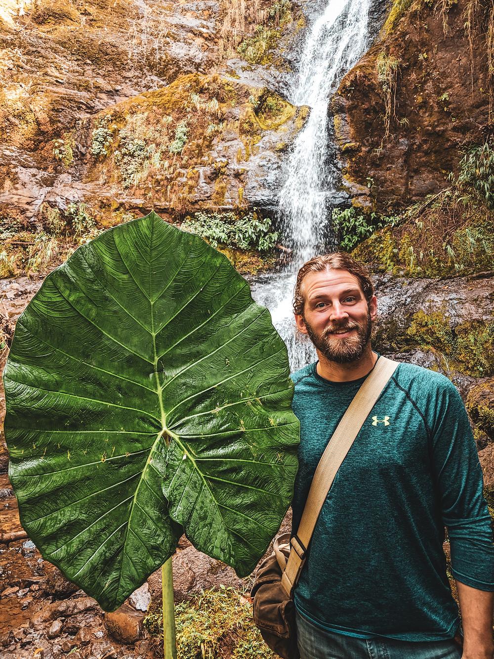 Giant leaf in Jardin, Colombia.