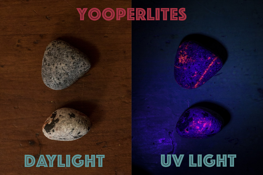 Yooperlites, a glowing rock found in the Upper Peninsula of Michigan, look like gray rocks during the day but glow bight orange under a UV light.