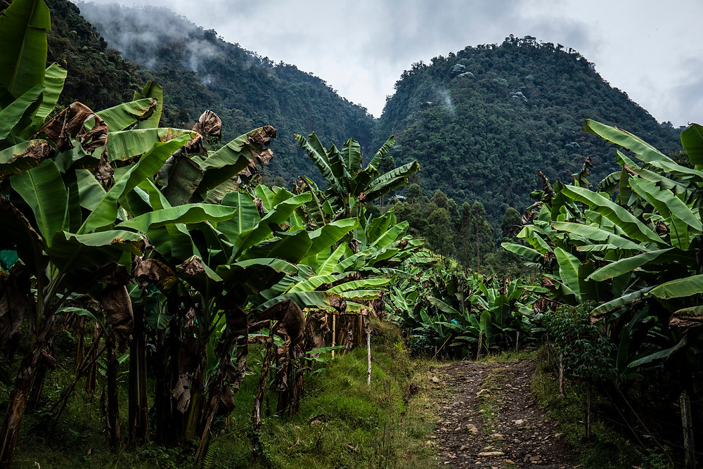 Mountains in Jardin, Colombia.