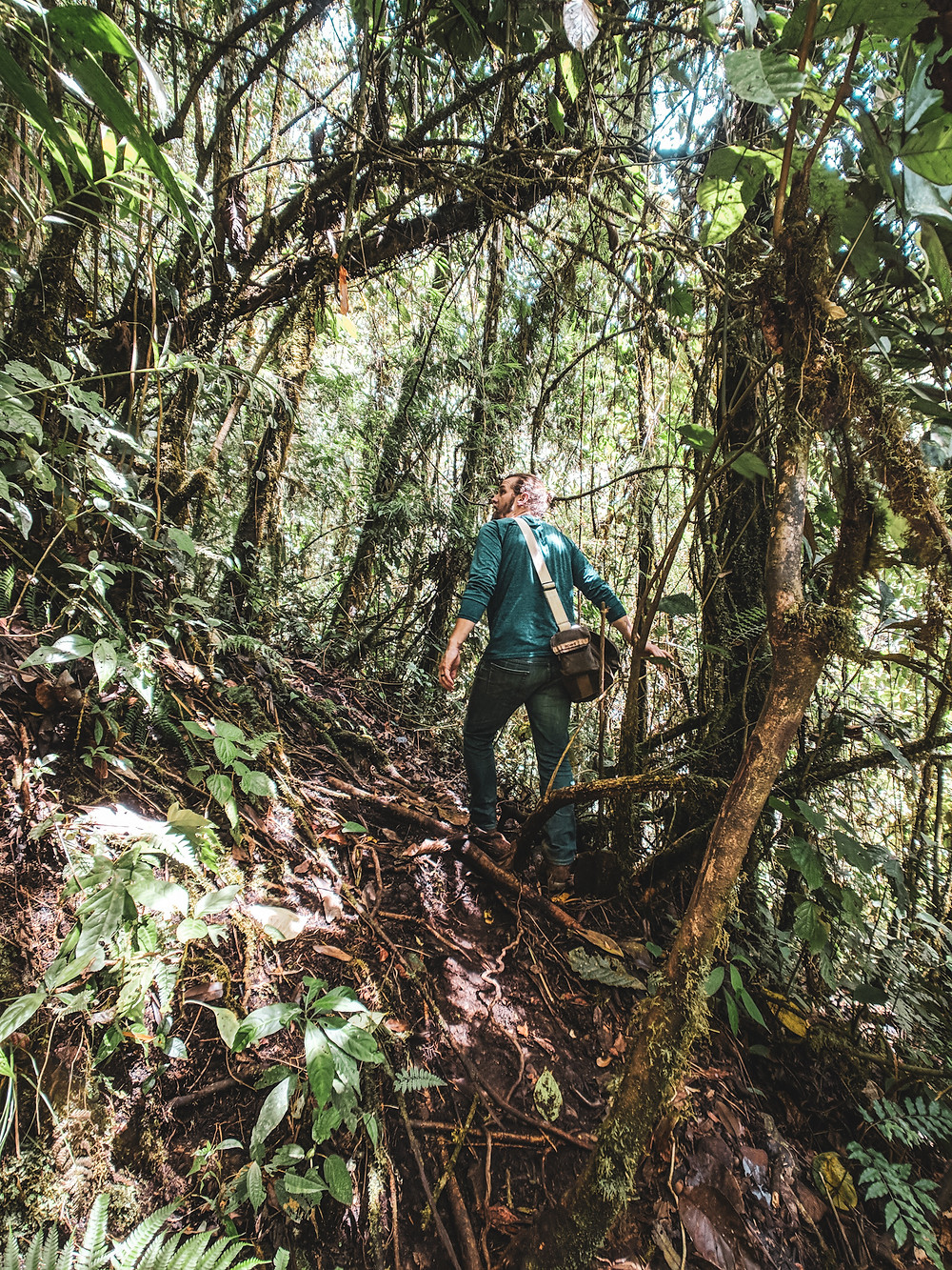 Hiking in the jungle of Jardin, Colombia.