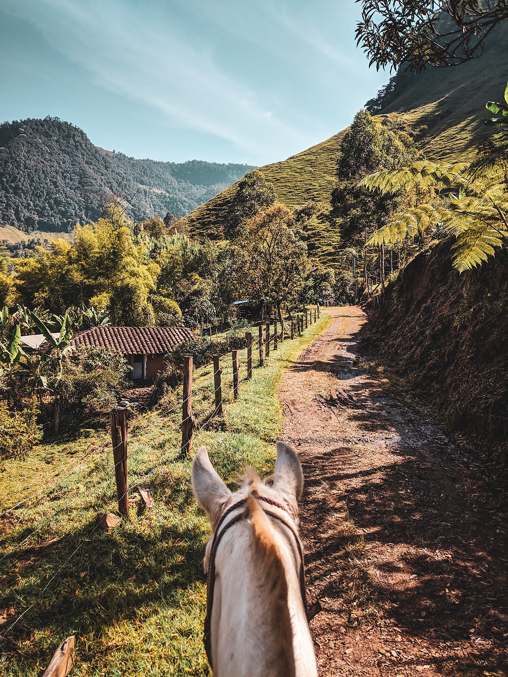 Riding horses in the mountains of Jardin, Colombia.