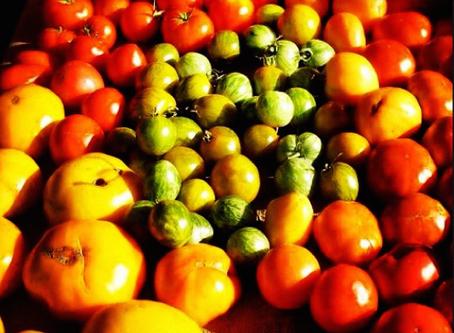 5 bonnes raisons de devenir végétarien