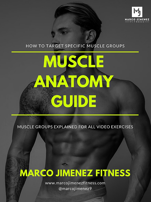 Muscle Anatomy Guide