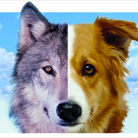 Your Wolf in Dog's Clothing: The Benefits of a Raw and Natural Diet