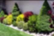 Ornamental Tree Care