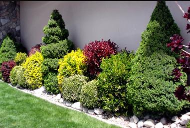 Ornamental Tree & Shrub Care