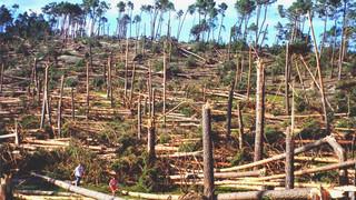 1 de junio de 1999, un tornado arrasa un pinar entre Burgos y Soria