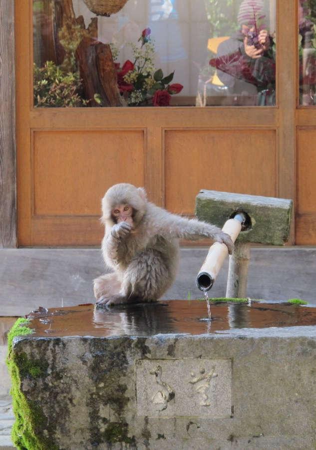 Snow Monkey & Shibu Onsen Tour