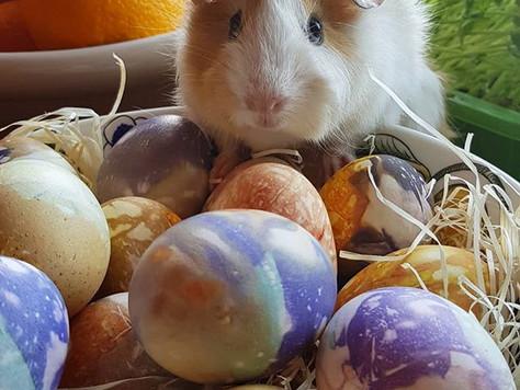 Hyvää Pääsiäistä & Stöpselnäsans