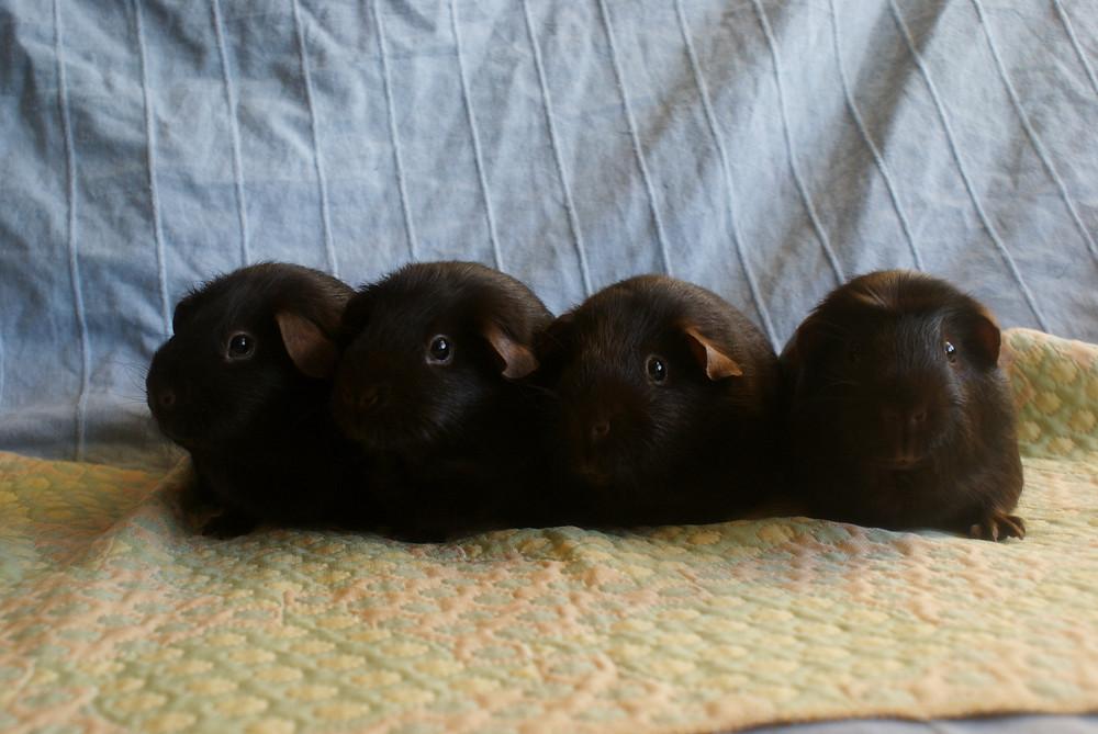 Vasemmalta oikealle: Taya, Nutella, JumJum & Brownie