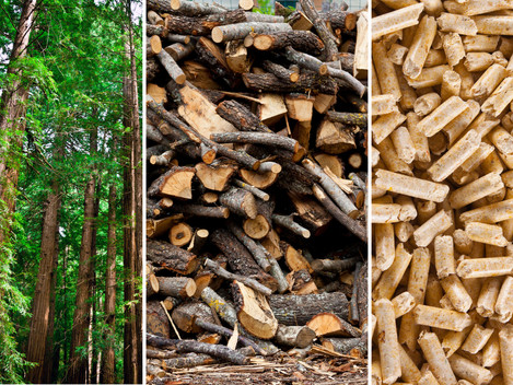 Europe takes further steps in support of Biomass energy