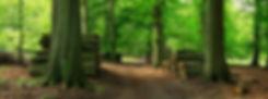 AdobeStock_123570814.jpeg