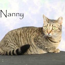 Nanny Cat.jpg