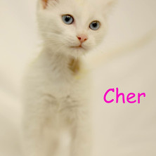 Cher.JPG