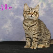 Millie.jpg