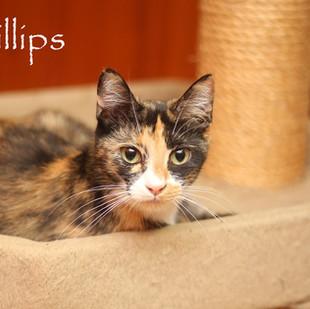 Phillips.jpg