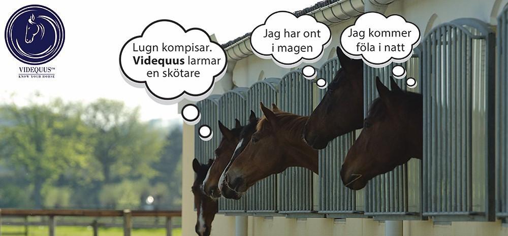 Videquus intelligent övervaningskamera för häst