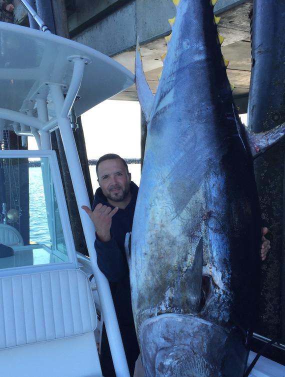 Giant Bluefin Tuna
