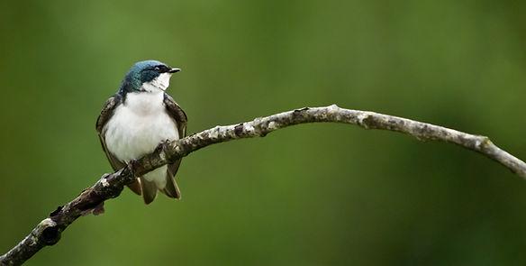 Bird on Galiano Island_ Photo from the G