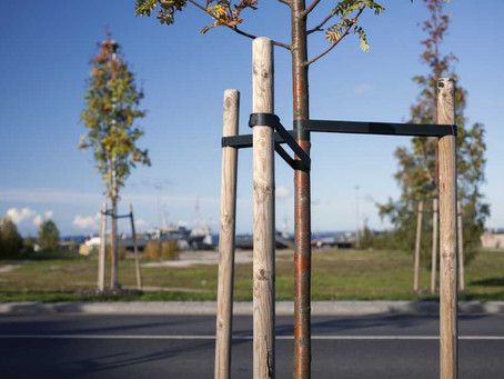 Tree Staking - To Do, Or Not To Do?