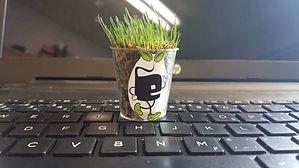 Potof grass on keyboard