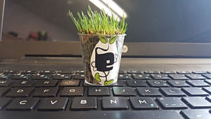 Potof grass on keyboard