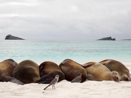 Galapagos Islands!