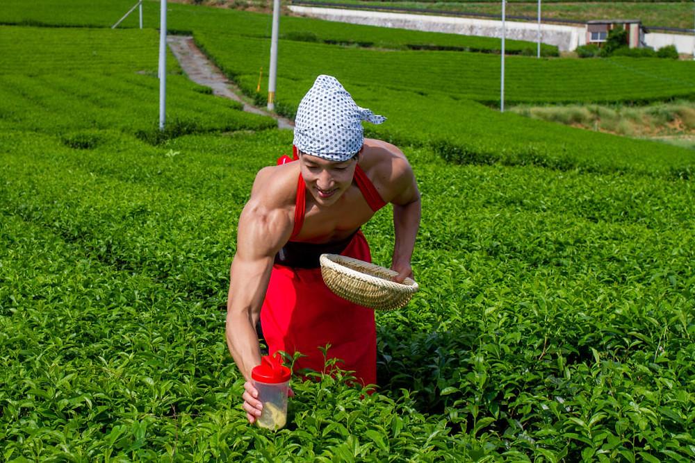 Mixing Protein Shake While Tea-Picking