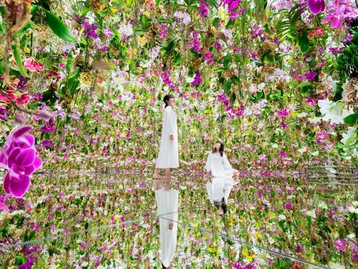 TeamLab Planet's Floating Flower Garden showcases unique blue orchids at new exhibit
