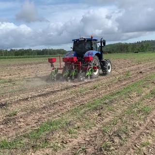 Soybean Planting at Calen Plot