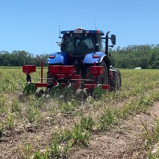 Soybean Planting at Pindi Pindi Plot