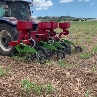 Soybean Planting at Glenella Plot