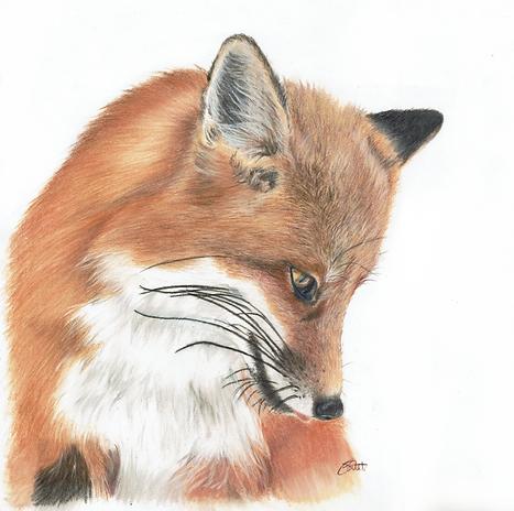 MR Fox2.png