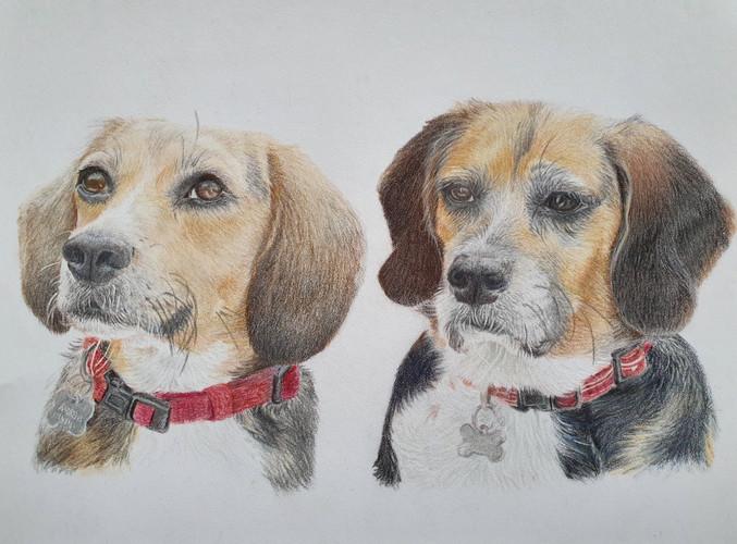 Double Beagle Portrait