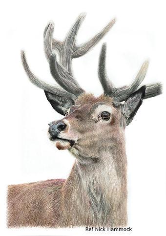 Reindeer calendar.jpeg
