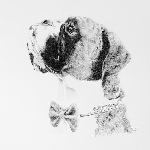 Boxer Dog Graphite Portrait