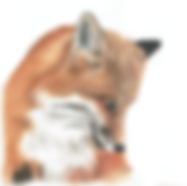 MR Fox2.png
