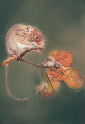 Field mouse small res.jpeg