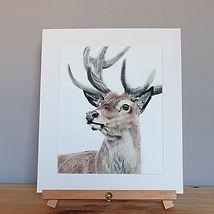 Stag Fine Art Print.jpg