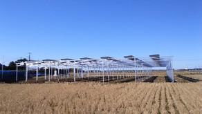 【導入事例】ソーラーシェアリング潮来発電所―茨城県