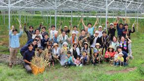 【ニュース】千葉市のソーラーシェアリング設備下でニンニクの収穫祭開催