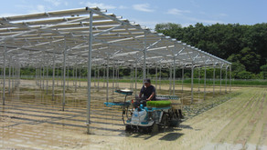 【インタビュー】豊田市初の水稲ソーラーシェアリング