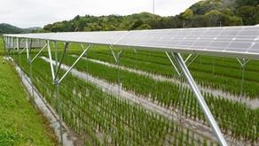 【導入事例】長田ファーム・ソーラーシェアリング