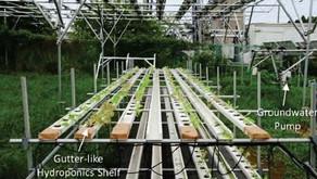 水耕栽培を組み込んだ営農型太陽光、千葉工大などが検証 – 日経テクノロジーオンライン