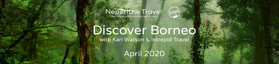Discover Borneo title only.jpg