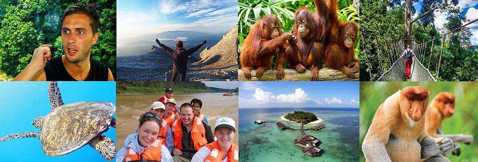 Discover Borneo website.jpg