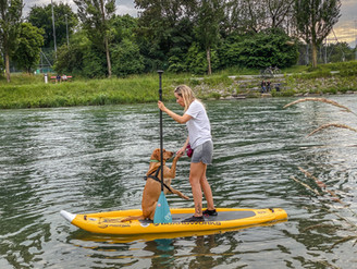 SUP-Kurs mit Hund Zürich