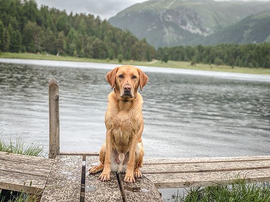 Lucky RUDELHUNDE Hundeschule Zürich.jpg