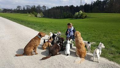 Nicole Locher - Rudelhunde
